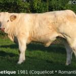 Coquelicot-esthetique1981