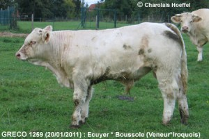 Ecuyer-1259-Greco-Wbg-aout1