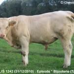 Episode-Gazouillis-1242-Wbg