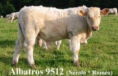 Necolo-9512-Albatros