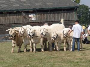 Episode dans le 1er prix d'ensemble au Marault: National 2013 avec l'élevage Besson