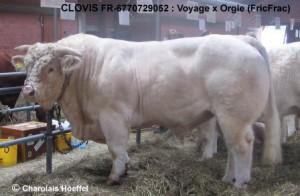 Voyage Clovis Alsfeld SRG11-0083 teichel