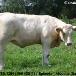 episode-1254-girouette