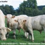 veneur-1275-Gallois-Wbg-aou