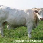 Rom-4098Tropique-500p