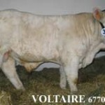 Rom-5131-Voltaire-BRD-230