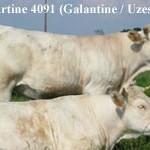 Rom-Tartine4091