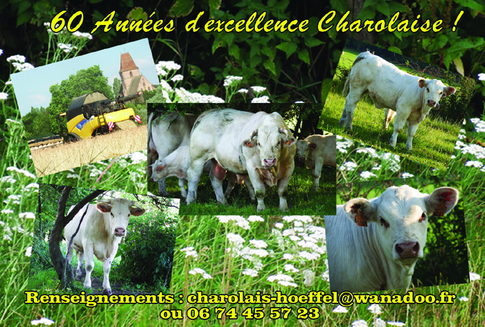 Flyers Fete du charolais Face B 2017 Final version B